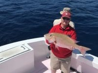 18lb Mutton snapper
