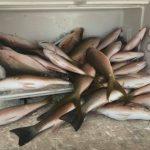 August Islamorada fishing snappers