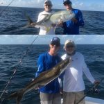 Jacks and cobia